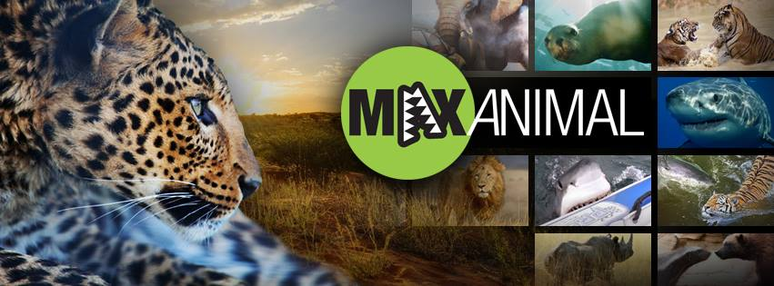 10928856 427897840698690 9026840658331912850 n In The Limelight: The Wild World of MaxAnimal!